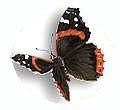 Vianden Vlinder